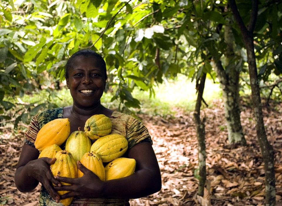 Kvinde med kakaofrugten der bliver til mørk chokolade Kilde Kaoka.fr